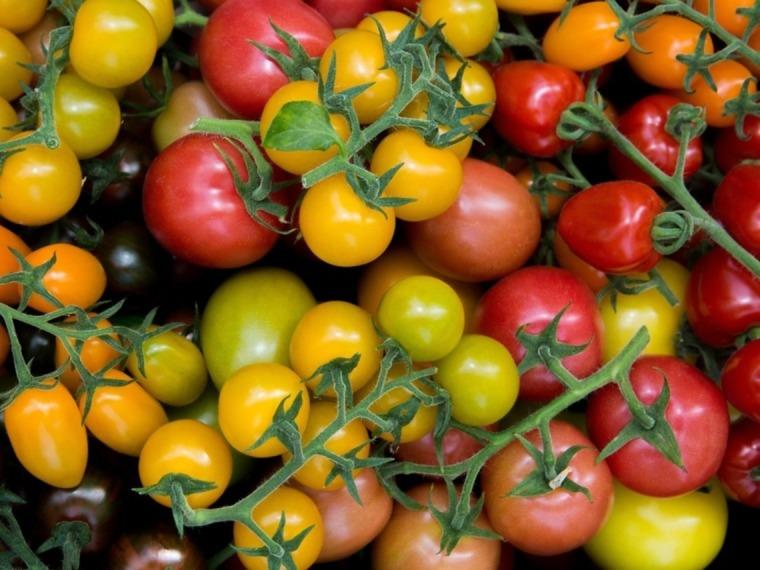 Spezialitäten Tomaten